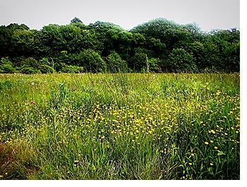 14apr23_ailt_forest.jpg